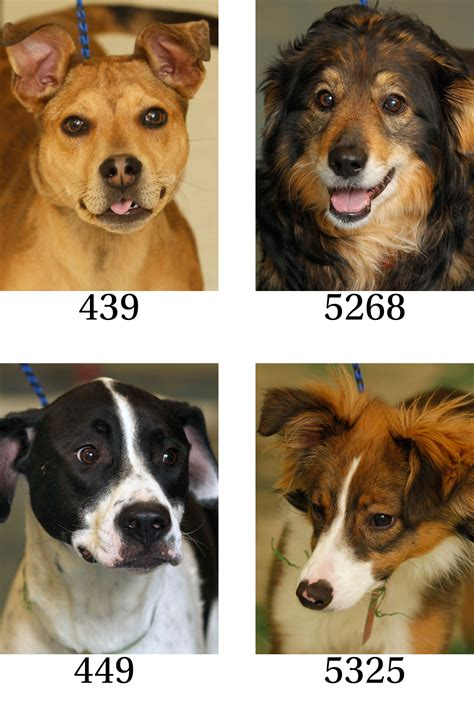 Lucas County Dogs for Adoption: 3-27 - The Blade