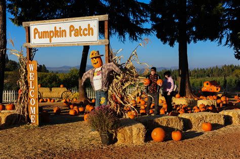 Apple Hill – Ripe for Picking – California Fall Color