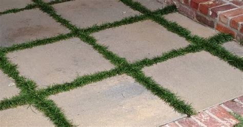 Patio area with monkey grass between pavers | For the Home