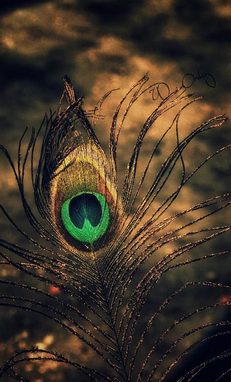 feather Image by Wilfrido Ordoñez