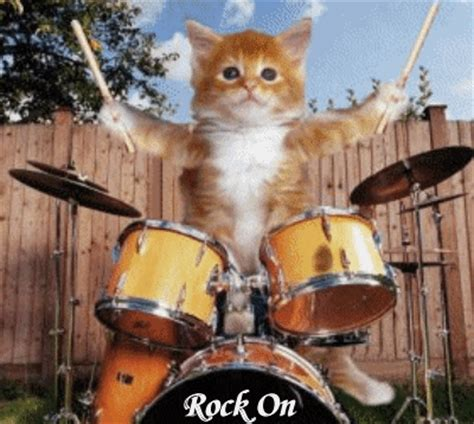 Drummer Cats: A Magazine About Feline Drummers   Tom Tom