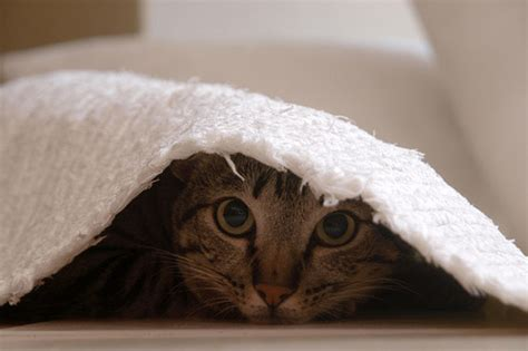 Cat Photography: Playing Hide and Seek - AmO Images - AmO