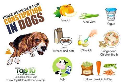Home Remedies for Constipation in Dogs   Top 10 Home Remedies