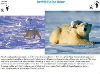 Arctic Animals Photographs, Facts and Printable Writing