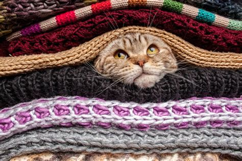 The cat is hiding among knitted clothes Jigsaw Puzzle